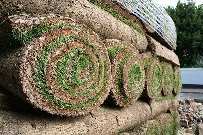 C mo preparar el suelo para plantar c sped mr c sped - Semillas de gramon ...