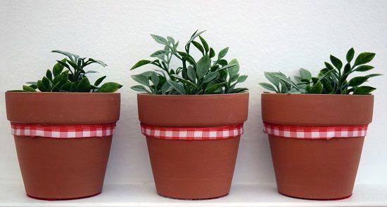 macetas plantas hogar